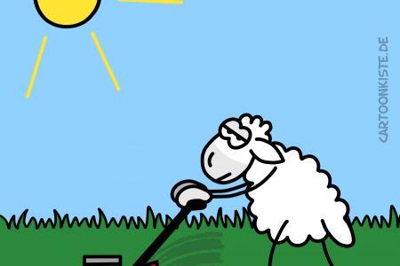 maeh-sheep2.jpg