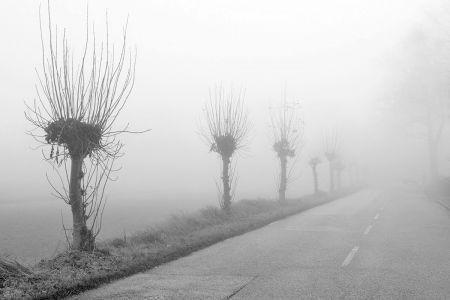 nebel-weiden.jpg