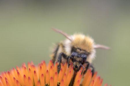 flower-bee-2.jpg